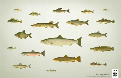 Sweden Fish (WWF) - Conceptual Advertising Photography
