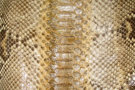 Gold Exotic Reptile Skin Texture