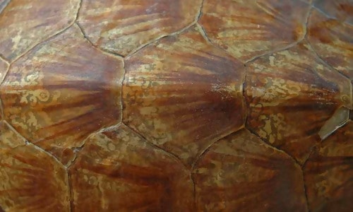 Turtle Shell Texture 2