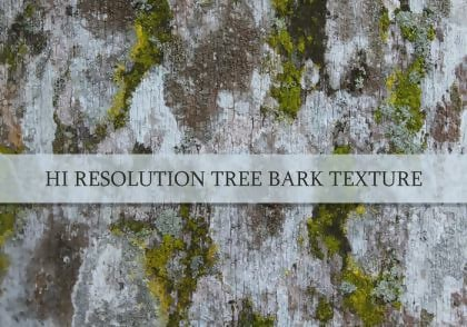 High-Resolution Tree Bark Texture