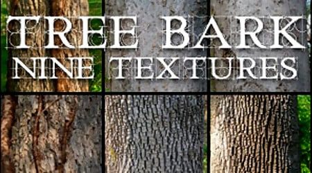 Nine Tree Bark Textures By Cobweb Stock