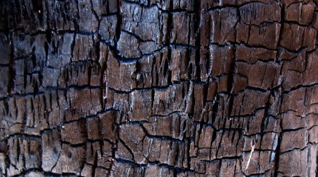 Tree Bark Nature Texture