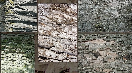 Fantasy Stock Tree Bark Textures Zip Pack 4