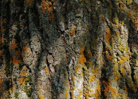 Free Amazing Tree Bark Textures