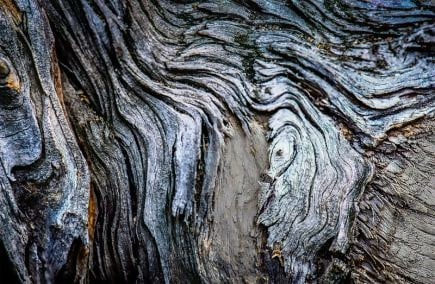 Free Flowing Tree Bark Texture