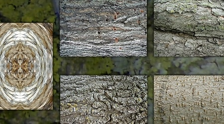 Tree Bark By Dazzle Textures