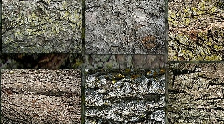 Tree Bark Textures Zip Pack 1