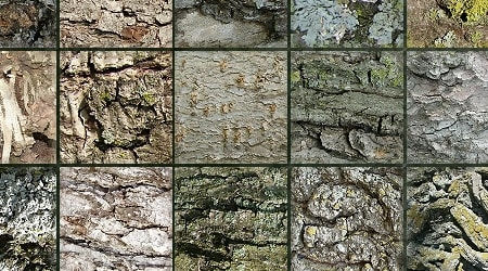 Seamless Stock Tree Bark Textures 1
