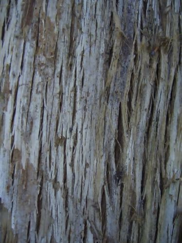 Tree Bark By Blueberry Stock