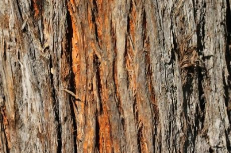 Tree Bark By Hoskinglndustries