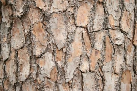 Elf-Fu-Stock Tree Bark Texture 1