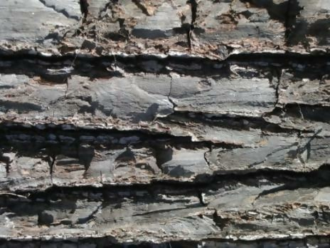 Tree Bark By Quaddles Description