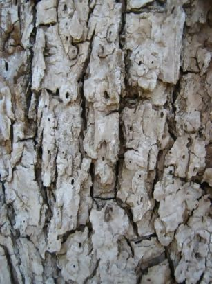 More Bark Tree Texture Description