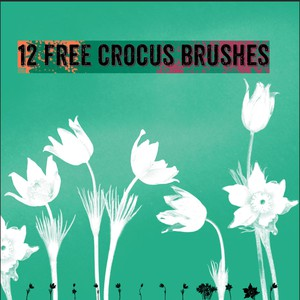 Crocus Brushes by Vector Beast