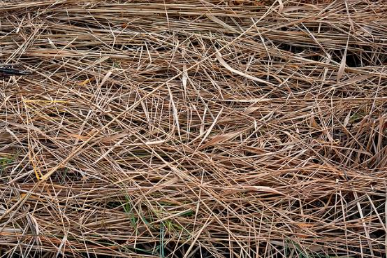 Bale of Dried Hay in a Park of Up close