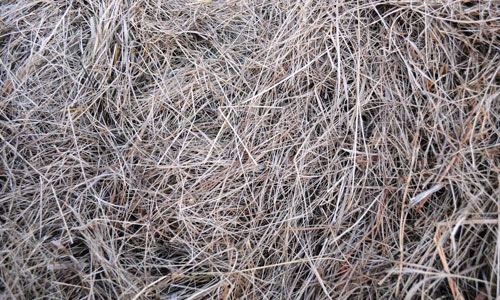 The texture of the Hay by Tumana Stock